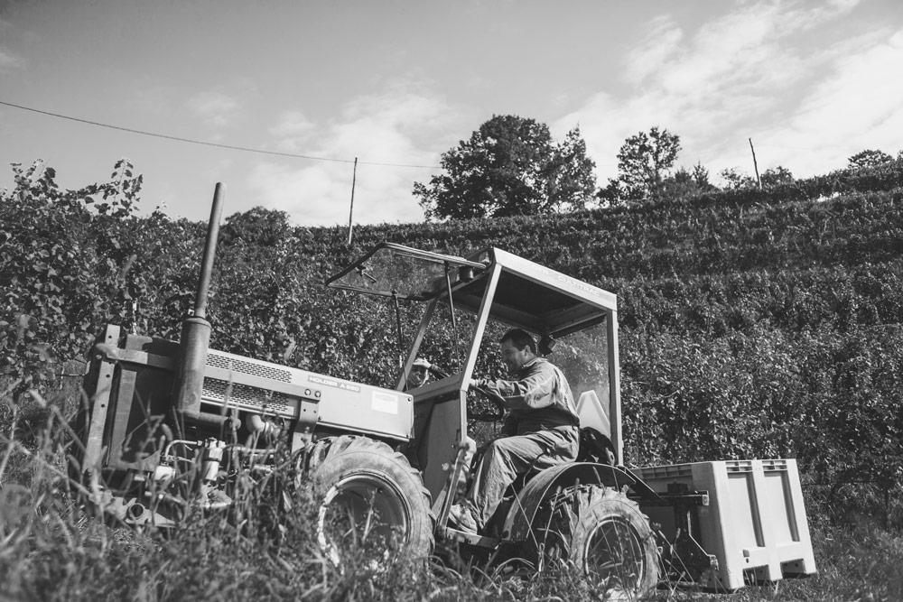 Weingartentraktor